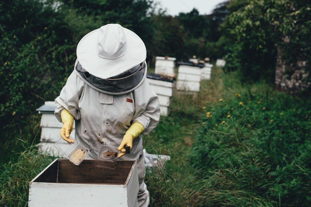 養蜂場の写真