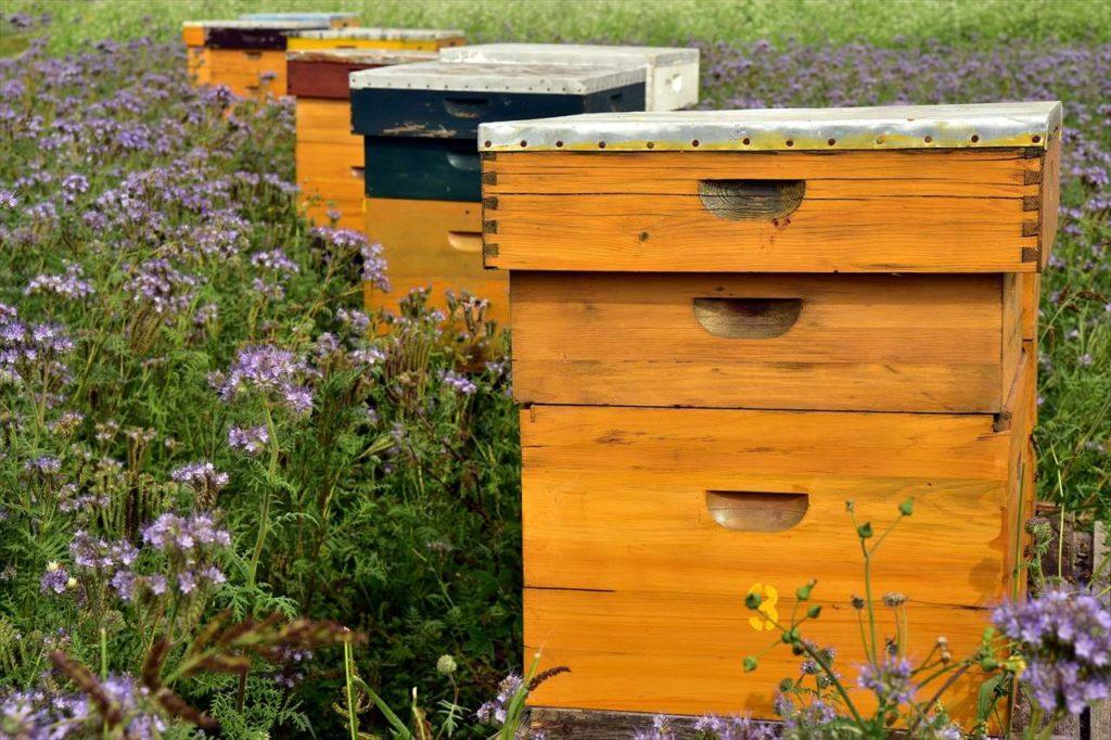 日本の養蜂場が生はちみつを売りたがらない理由の1つは蟻(アリ)