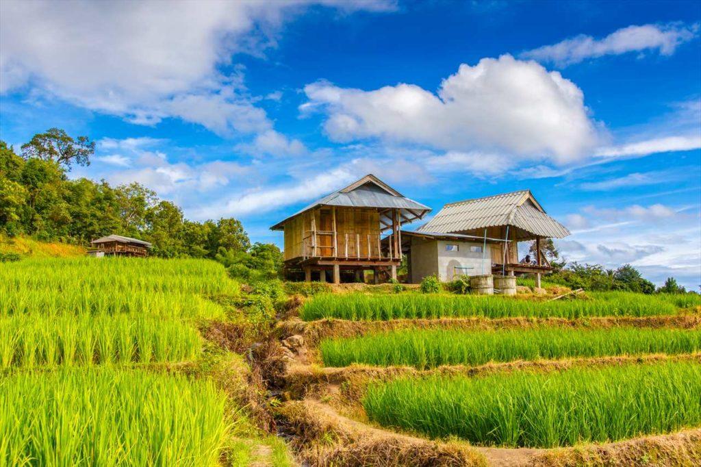 100%自然食品はベトナムが圧倒的に有利