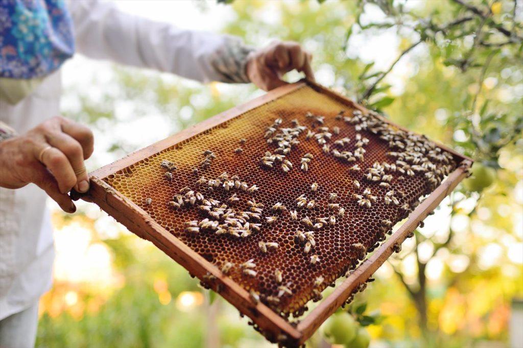 百花蜂蜜と単花蜂蜜の違い。どちらがおすすめ?