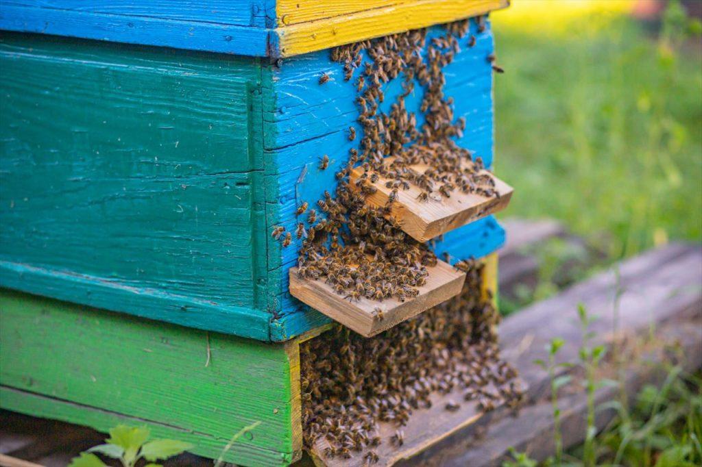 そもそも蜂蜜のオーガニックとは