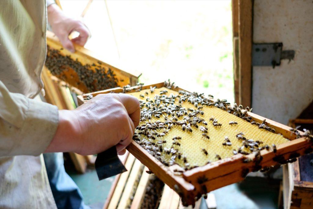蜂蜜が安い理由② 百花蜂蜜だから