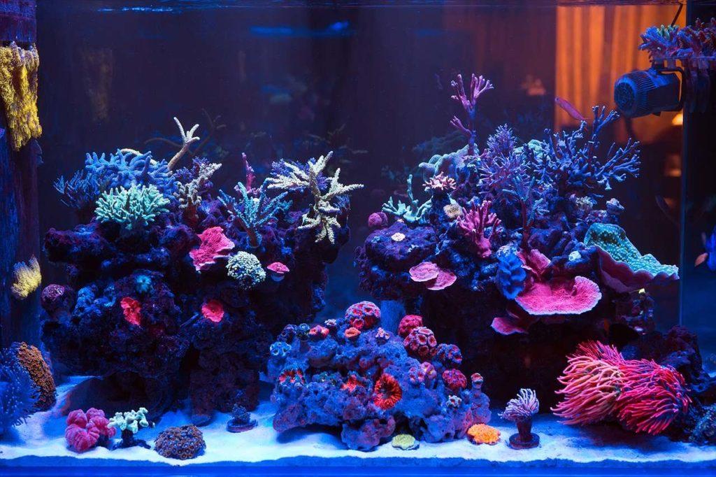 観賞魚&水槽