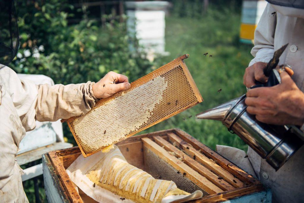 蜂蜜の熱処理と低温処理の紹介と違い